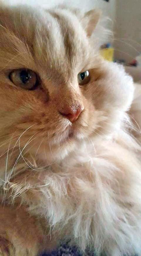 Volim mačke s profilima bivša djevojka koja se druži s nekim drugim vrati joj se